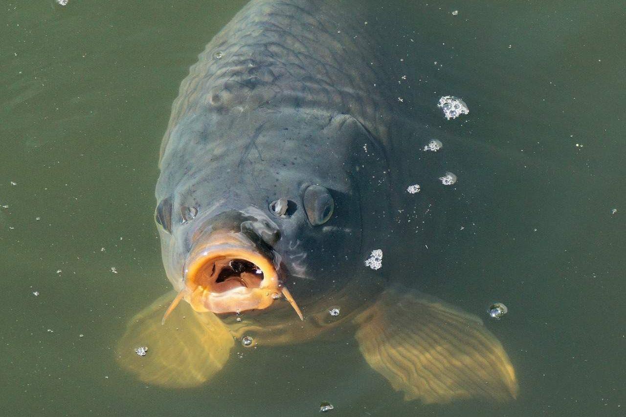Rybolov Poděbrady